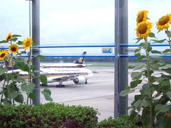 Singapore Airport sunflower garden